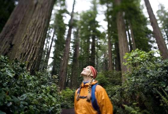 Best Redwood Hikes