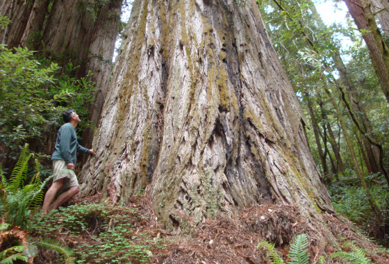Top Ten Redwood Coast Story Ideas