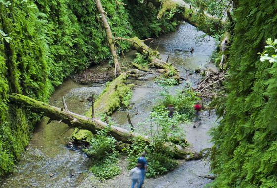 Hiking by a creek
