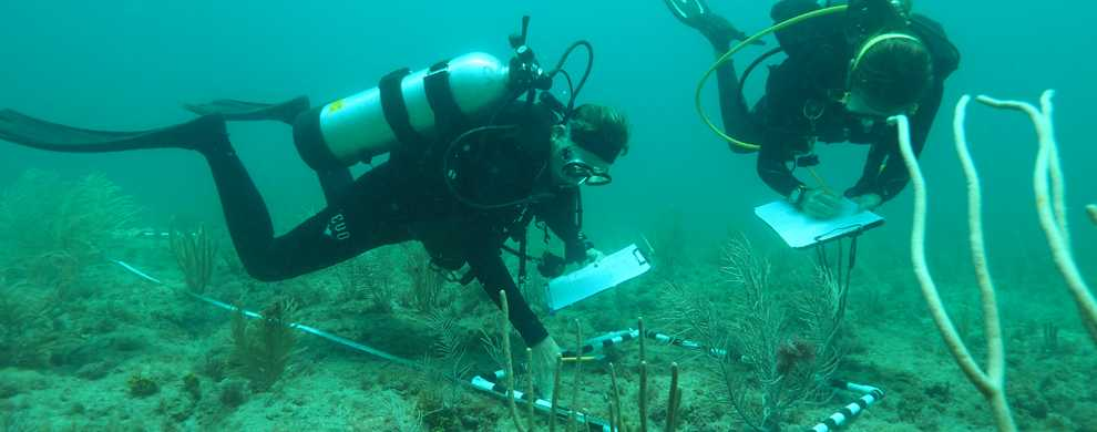 photo of two scuba divers measuring a coral reef