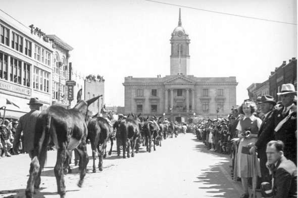 Leading mules to Courthouse