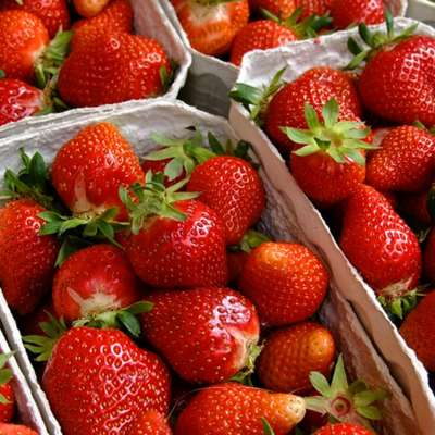 Fresh Finds: A Farmers' Market Guide