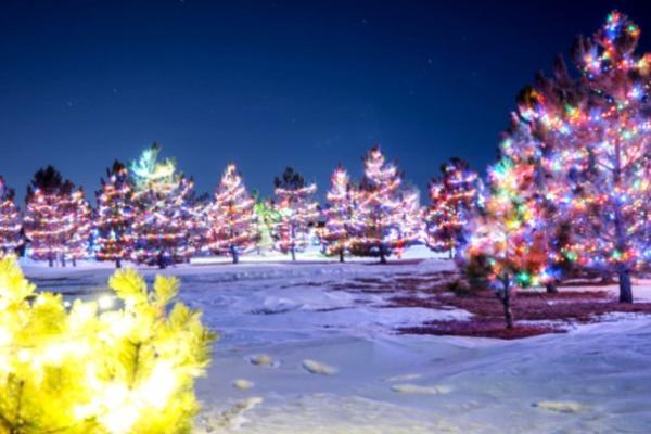 Hemi Lighted Forest