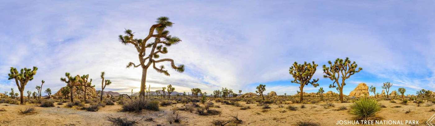CAD_CENTRAL_headerJoshuaTree
