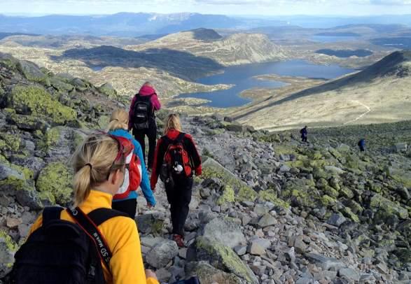 paradise hotel 2018 sverige norwegian amateur