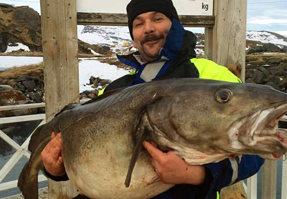 Big Fish Adventure, cod fishing in Norway