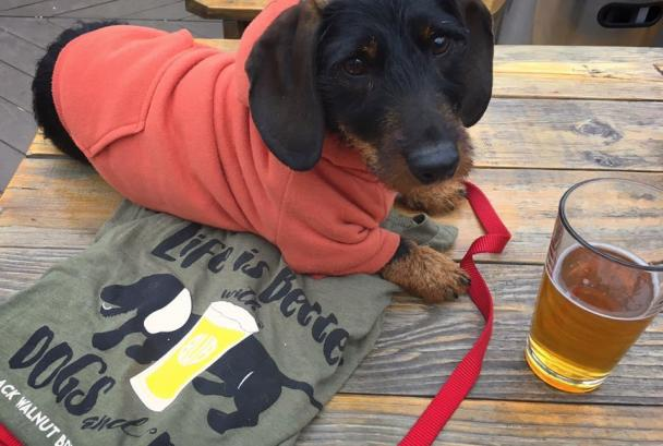 Puppy Winslow and a beer