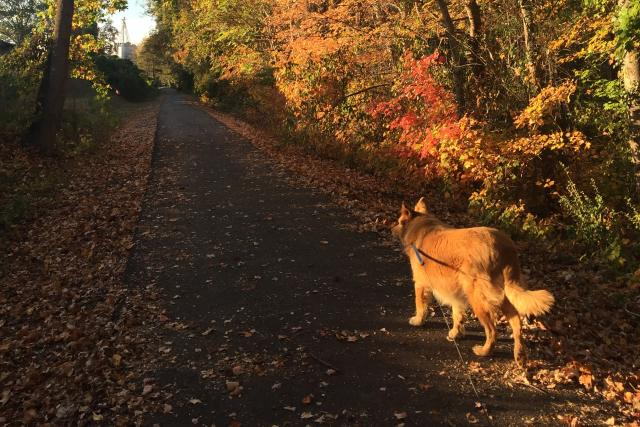 Fall on the Thermal Belt Rail Trail