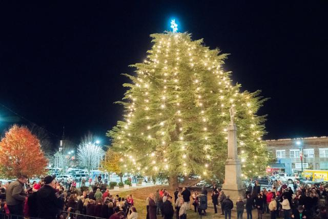 Largest Living Cedar Christmas Tree