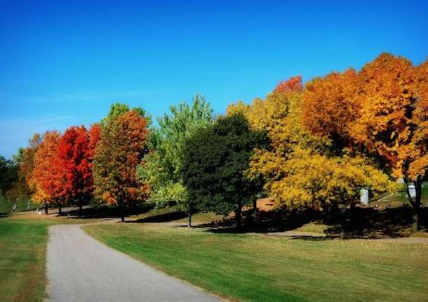 Fall Color Report