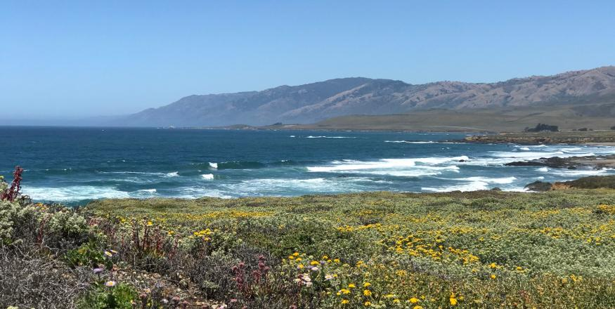 Piedras Blancas Light Station: A Magical Blend of History and Nature