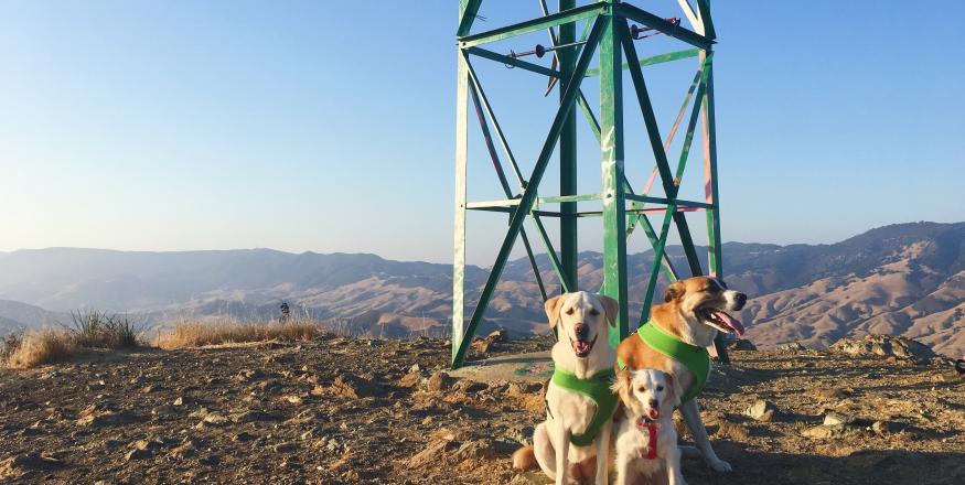 Dog-Friendly Hiking Trails in SLO County