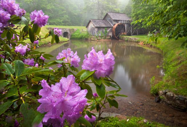 Enjoy these 5 spring blooms on the blue ridge parkway mightylinksfo
