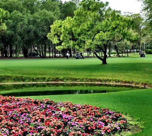 Innisbrook Resort and Golf Club