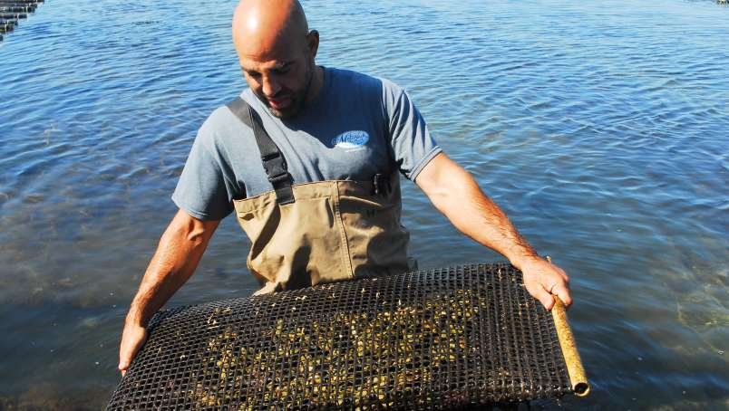 Matunuck Oyster Farm Tour-South Kingstown-South County