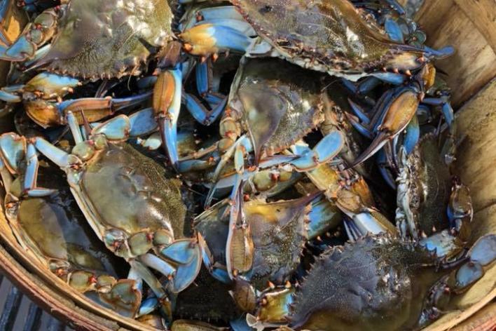 Dent White Crabs