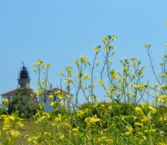 Beavertail Lighthouse, Jamestown Rhode Island