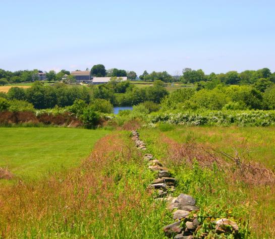 Tiverton Farmland