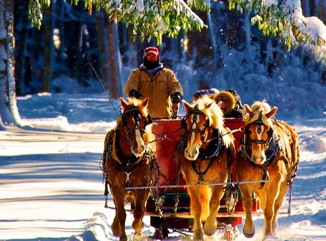 Highland Forest Sleigh Ride