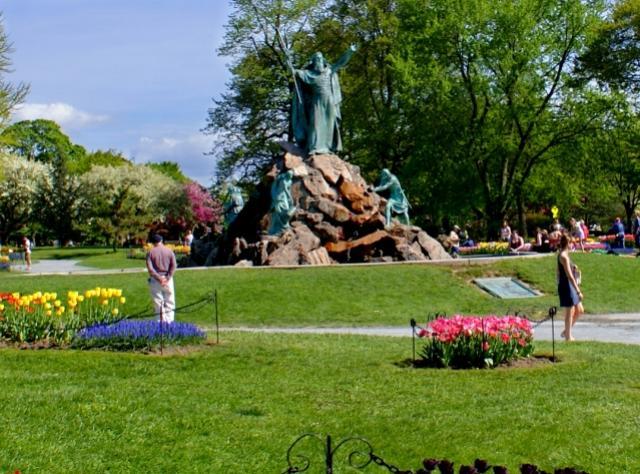 Tulips in Washington Park