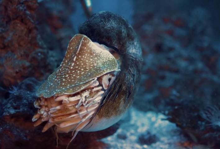 Velkommen til Risør Akvarium - Sørlandets eneste saltvannsakvarium
