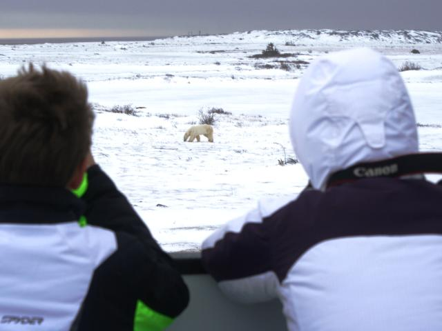 Polar Bear Viewing with the Great Canadian Travel Company
