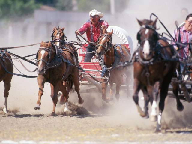 Wagon Races, Manitoba Stampede & Exhibition