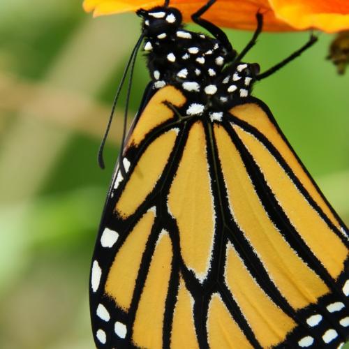 butterfly 1920x1080