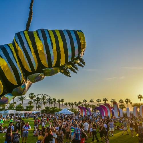 coachella caterpillar web