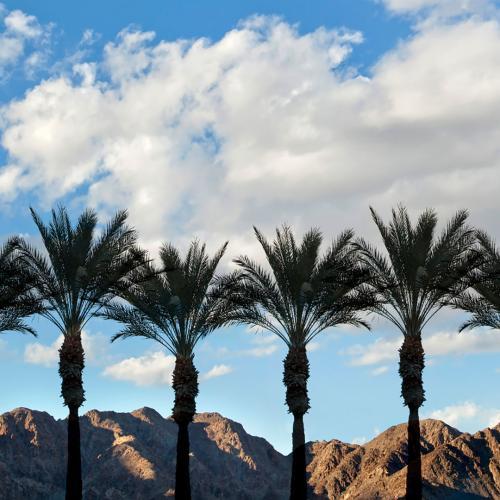 greater palm springs marijuana page