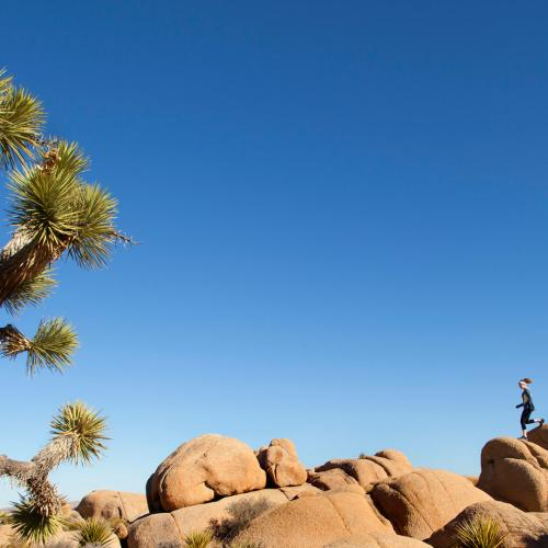 joshua tree wellness web