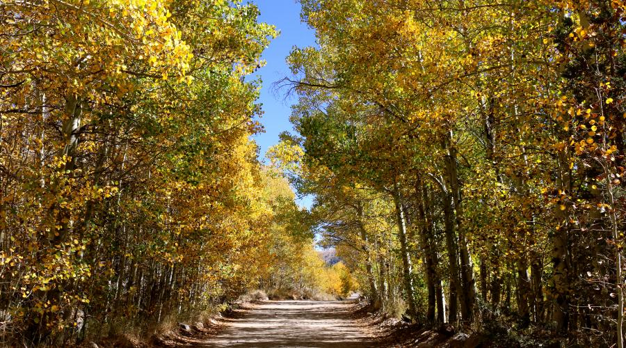 Green Creek Fall Colors