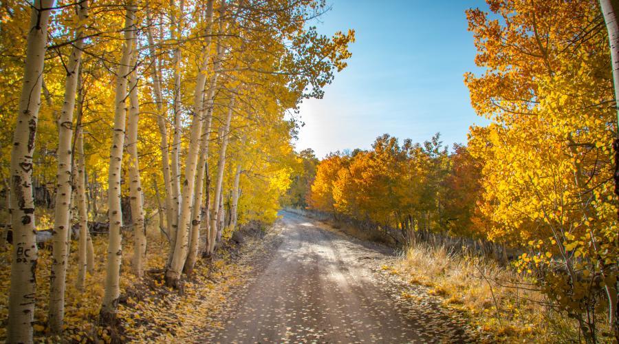 Lobdell road fall colors