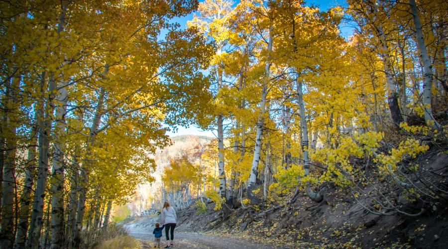 Lobdell Lake Road Fall Colors with Jess and James