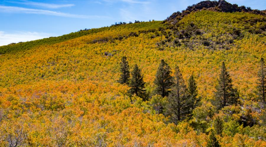 Sagehen Summit Fall Colors 2017
