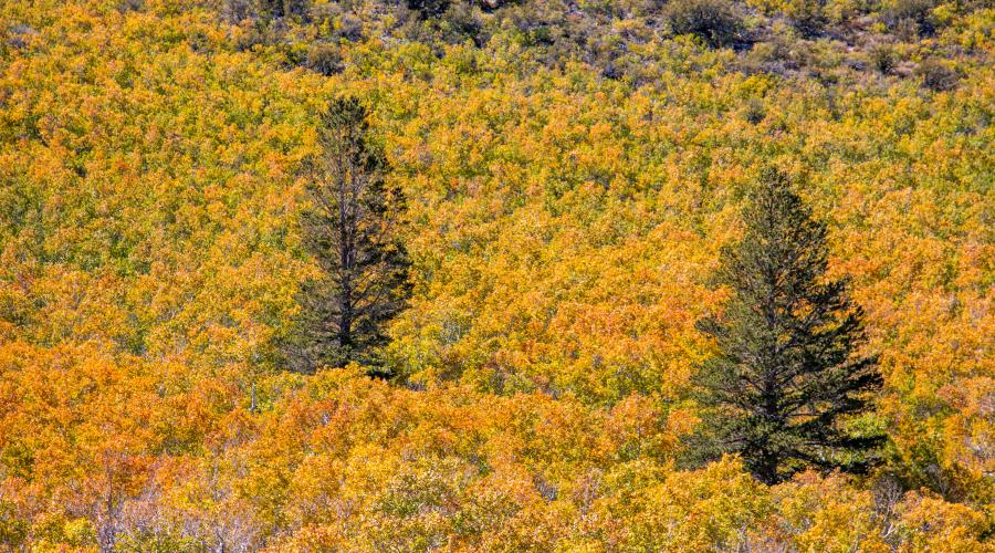 Pictured Above Sagehen Summit 9 25 17 Photo By Jeff Simpson Mono County Tourism Convict Lake Fall Colors