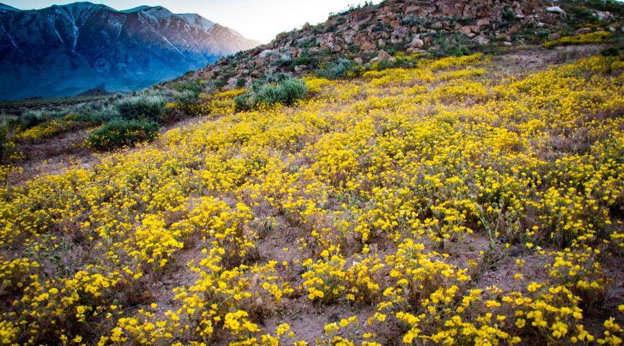 Wildflowers Sherwin Grade