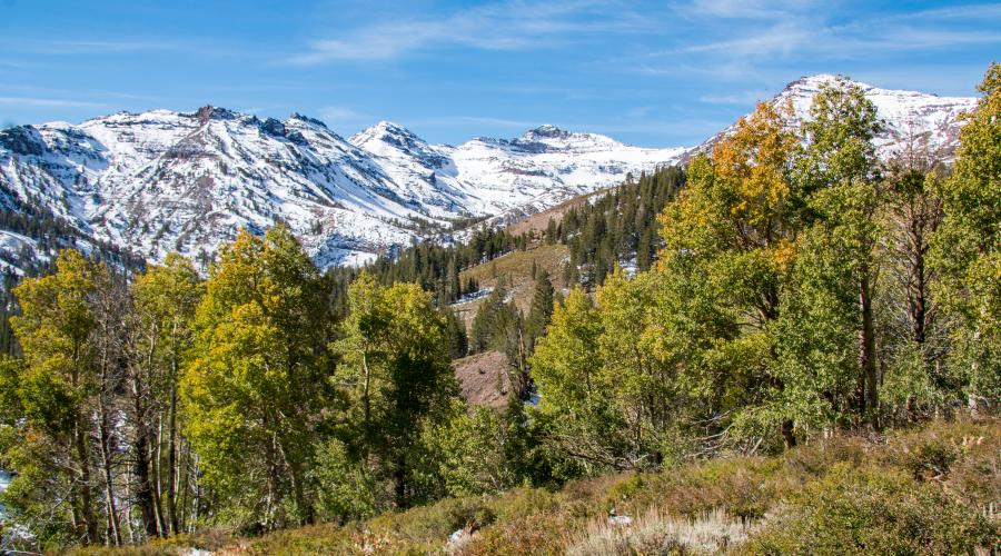 Sonora Pass Fall Colors 2017
