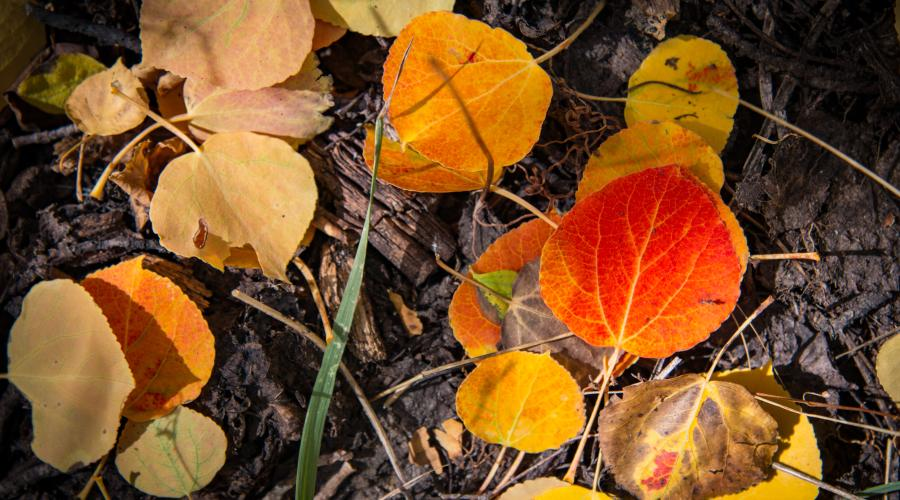 leaves on the ground fall colors