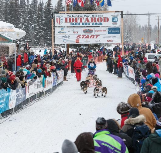 2015 Iditarod start Fairbanks