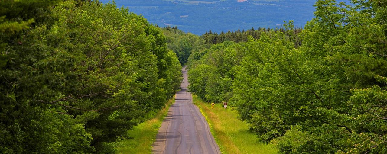 Finger Lakes National Forest- Finger Lakes Region
