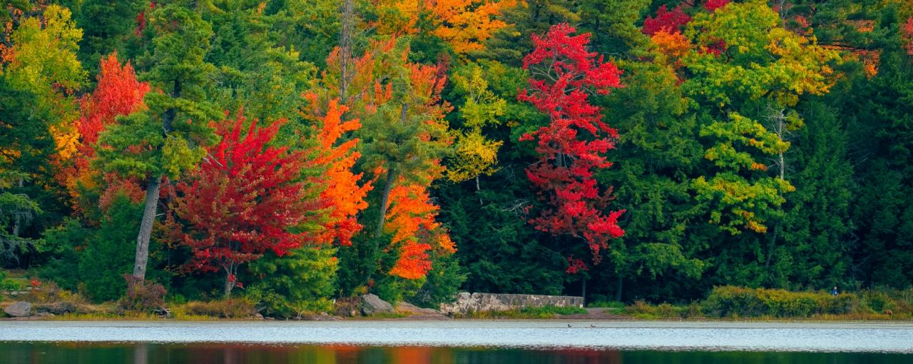 Fall Foliage In New York Autumn Leaves Scenic Drives