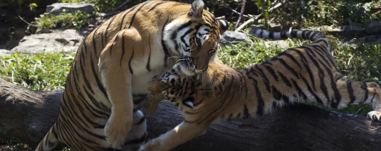 Animals Amp Zoos In New York Aquarium Of Niagara Amp More
