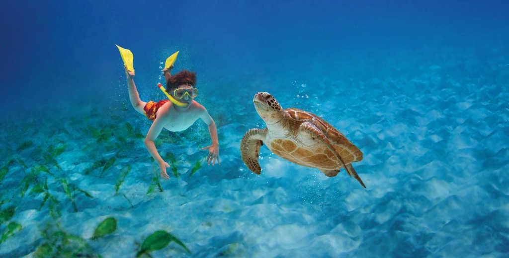 Fort Lauderdale Sea Turtles | Summer Sea Turtle Programs