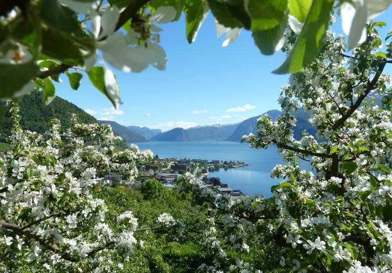 Árboles en flor en los fiordos