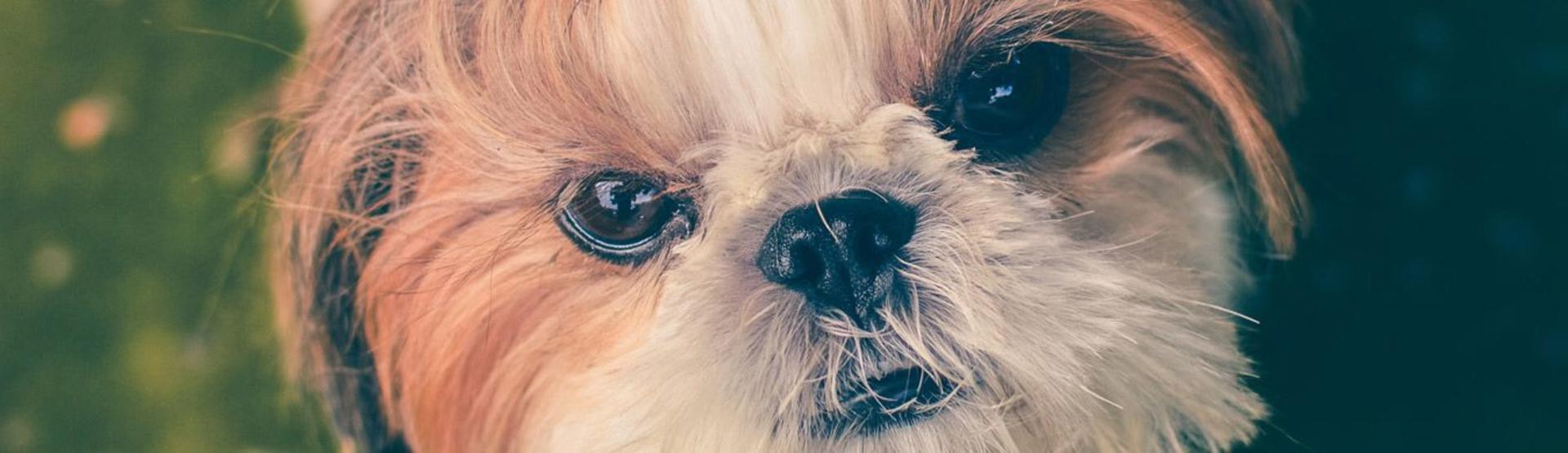 doggroomheader__hero.jpg