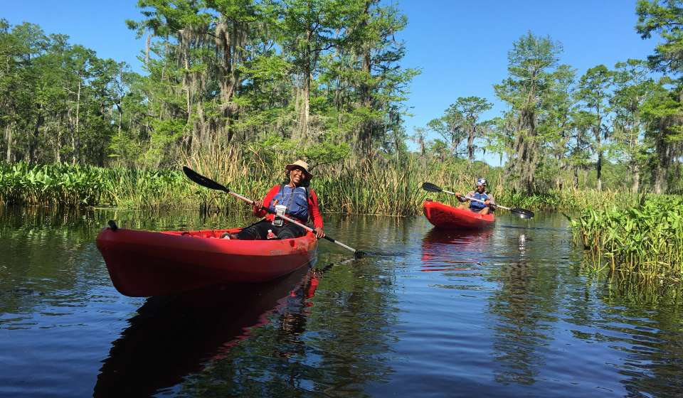 A New Orleans Kayak Swamp Tour