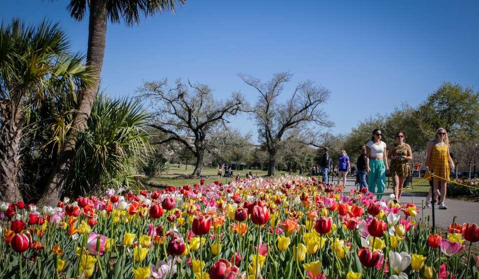 New Orleans City Park- Springtime