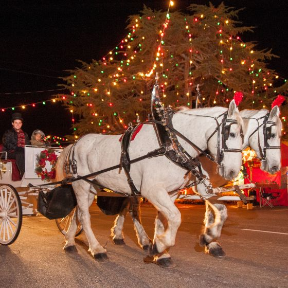 Downtown Forest City Carriage Rides