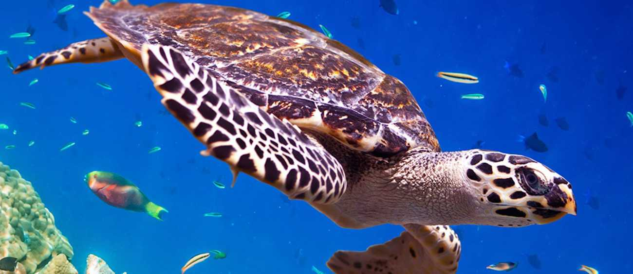 A photo of a sea turtle